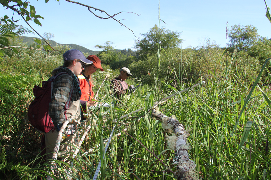 workers monitoring wetlands